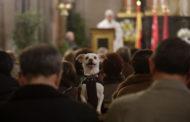 """""""Anche i cani hanno un cuore"""", animalisti interrompono messa a Genzano"""