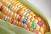 """""""Plant Molecular Farming"""", nuova speranza contro i tumori e le malattie autoimmuni"""