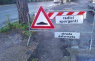 Genzano-Ariccia, il problema delle radici affioranti sull'Appia