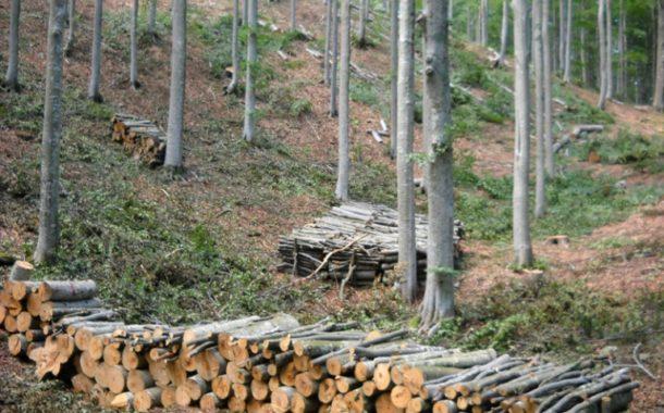 ARICCIA: Le associazioni ambientali si oppongono al taglio ceduo del castagno