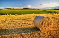 LAZIO, CONTRASTO AL LAVORO IRREGOLARE IN AGRICOLTURA