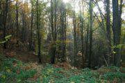 Boschi cedui di castagno; a Genzano un'asta Pubblica per la vendita del materiale legnoso