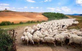 La Transumanza del bestiame è patrimonio UNESCO