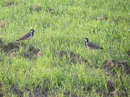 I pantani della Doganella tra le zone umide che tutelano ecosistemi di straordinaria biodiversità
